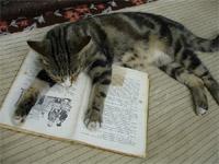 Gatto che dorme su un libro