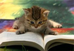 Micio che legge