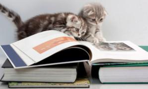 30 curiosità sulle mie abitudini di lettura