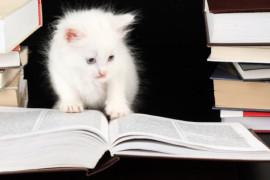 Alla ricerca del lettore ideale