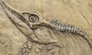 La fossilizzazione dell'autore
